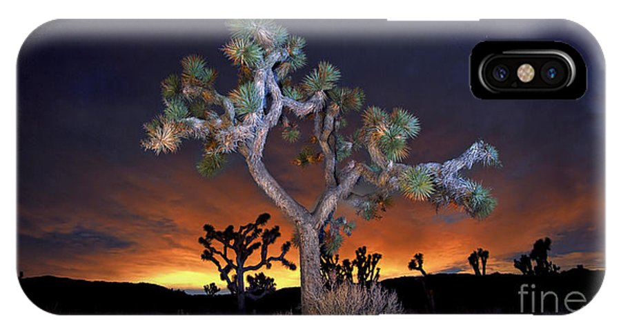 Trees IPhone X / XS Case featuring the photograph Night Bloom by Marco Crupi