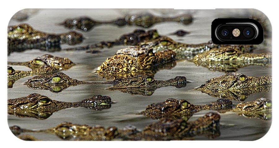 Wildlife IPhone X Case featuring the photograph Nile Crocodiles Crocodylus Niloticus by David Santiago Garcia