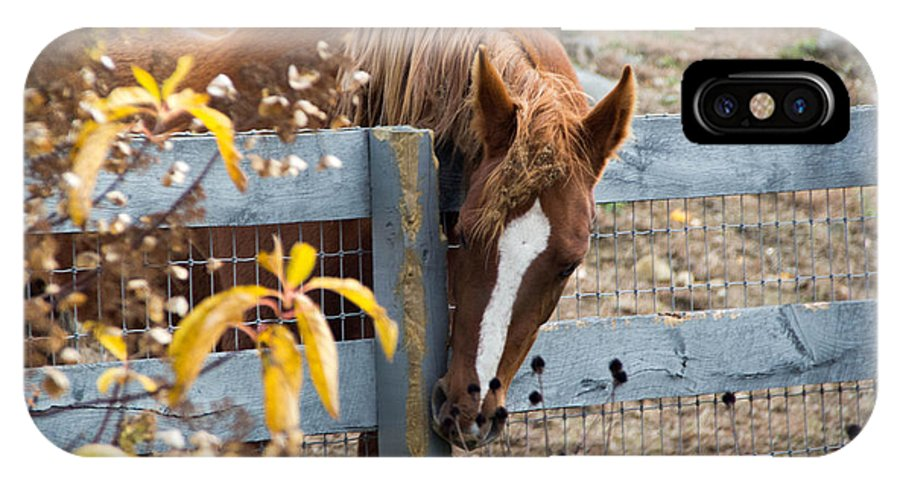Horse IPhone X Case featuring the photograph No Apples Here by Barbara Blanchard