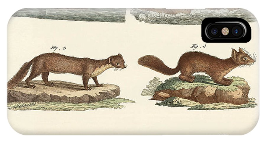 River Otter IPhone X Case featuring the drawing Noble Furs by Splendid Art Prints