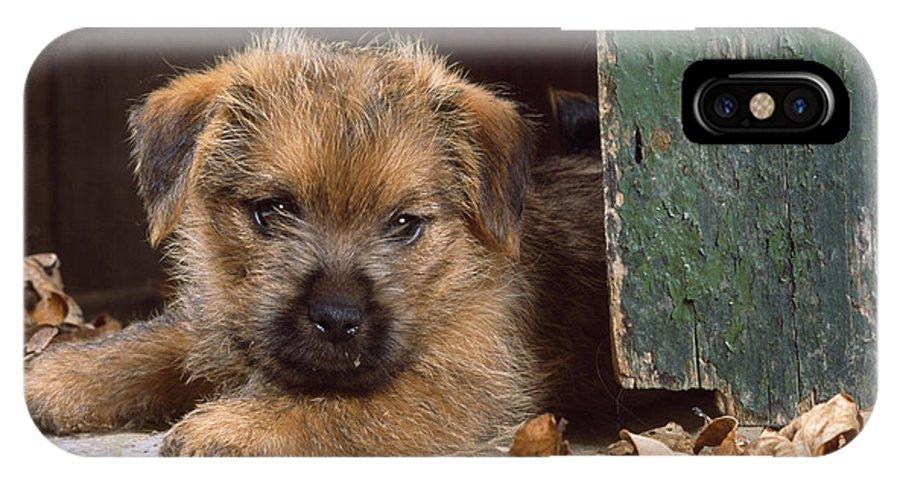 Norfolk Terrier IPhone X / XS Case featuring the photograph Norfolk Terrier Puppy By Barn Door by John Daniels