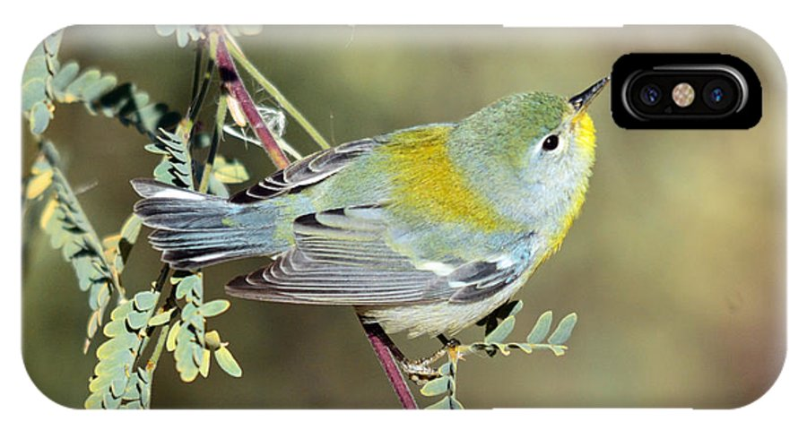 Smallbirds Warbler Avian Nature Wildlife Birds IPhone X Case featuring the photograph Northern Parula by Eduardo Dinero