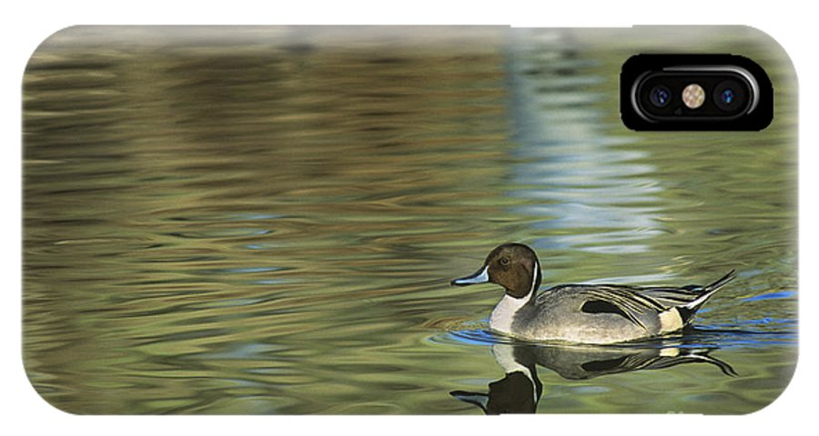 North America IPhone X Case featuring the photograph Northern Pintail In A Quiet Pond California Wildlife by Dave Welling
