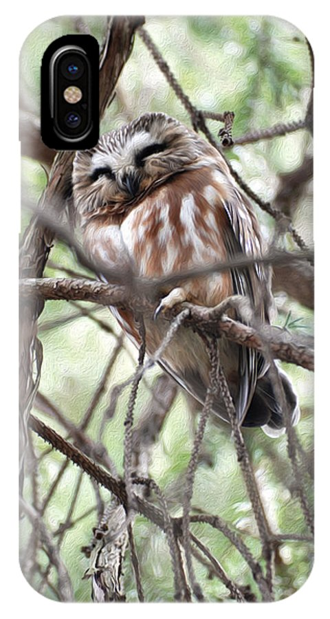 Northern Saw-whet Owls IPhone X Case featuring the photograph Northern Saw-whet Owl by Tracy Winter