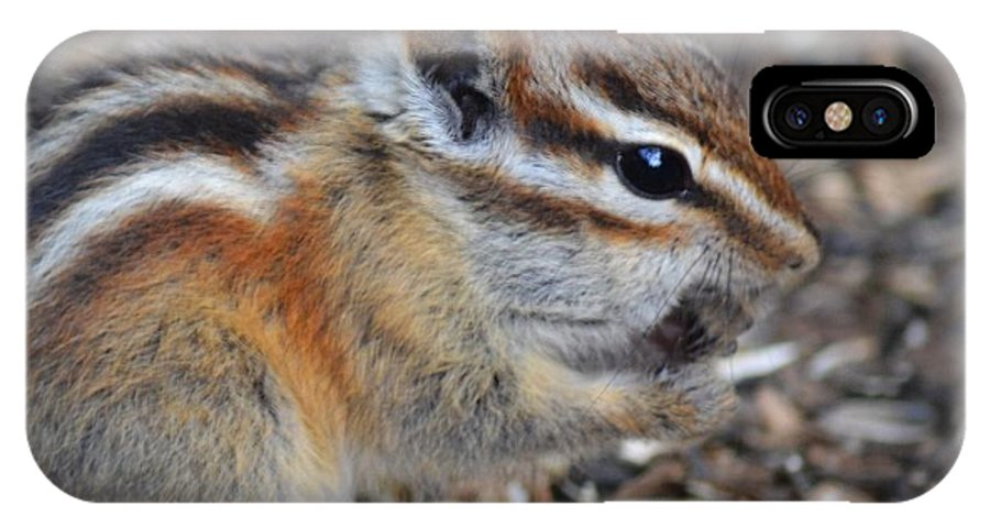 Chipmunk IPhone X Case featuring the photograph Nuts by Sarah Crawford