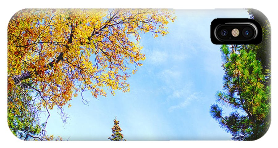Fall IPhone X Case featuring the photograph Oak Tree In Autumn Sky by Fred Ziegler