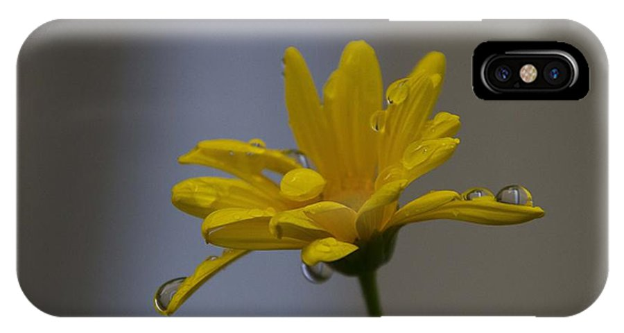 Flowers IPhone X Case featuring the photograph October by Miguel Uribe