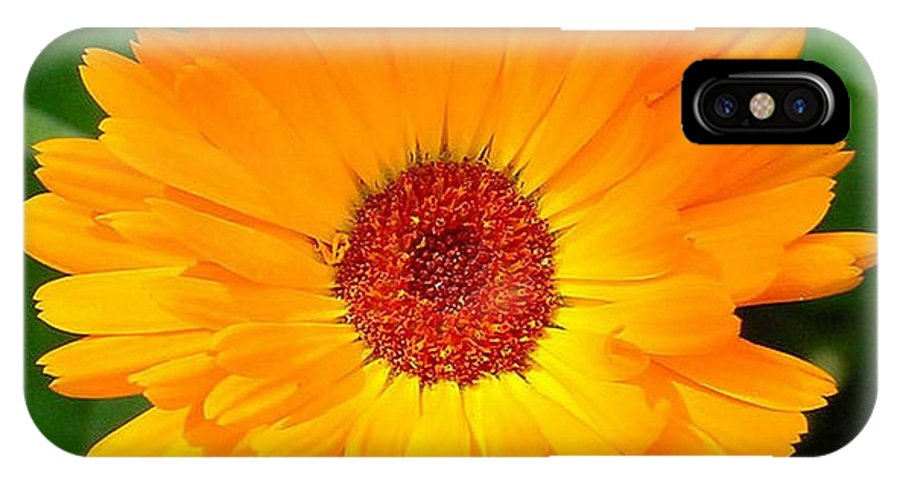 Flower IPhone X Case featuring the photograph October's Summer Sunlit Marigold by Taiche Acrylic Art