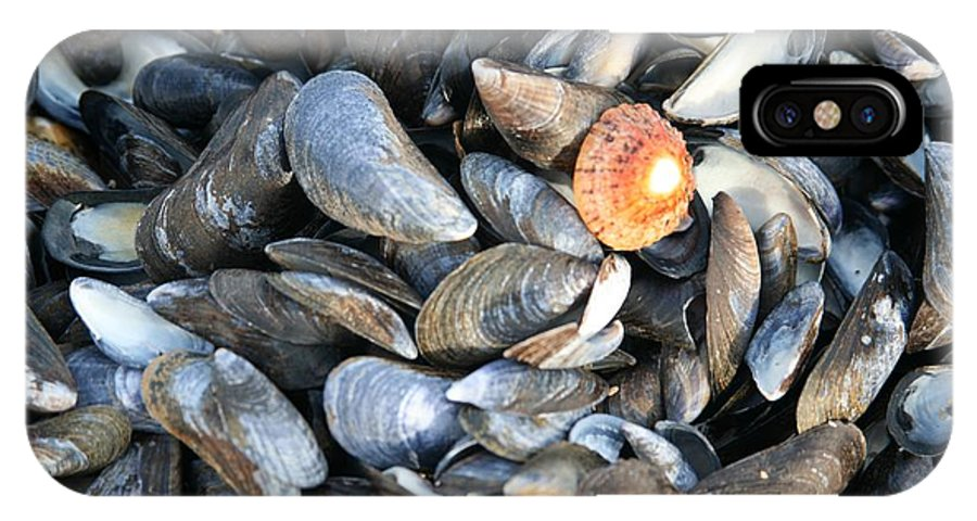 Shells IPhone Case featuring the photograph Odd Man Out by Christopher Rowlands