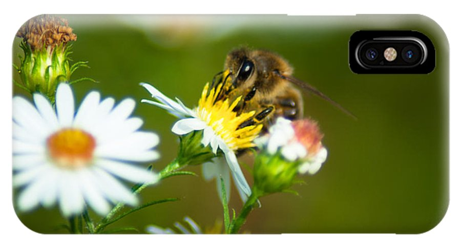 Optical Playground By Mp Ray IPhone X Case featuring the photograph Of Bee And Flower by Optical Playground By MP Ray