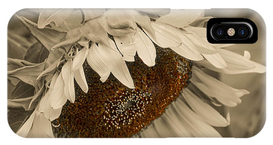 Mexican IPhone X Case featuring the photograph Old Fashioned Sunflower by Michael Moriarty