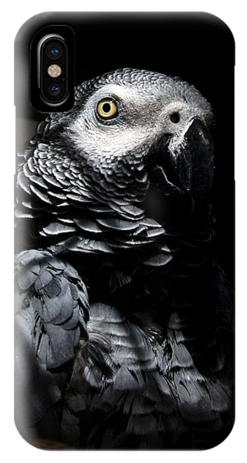 Bird IPhone X Case featuring the photograph Old Gray by Steve Godleski