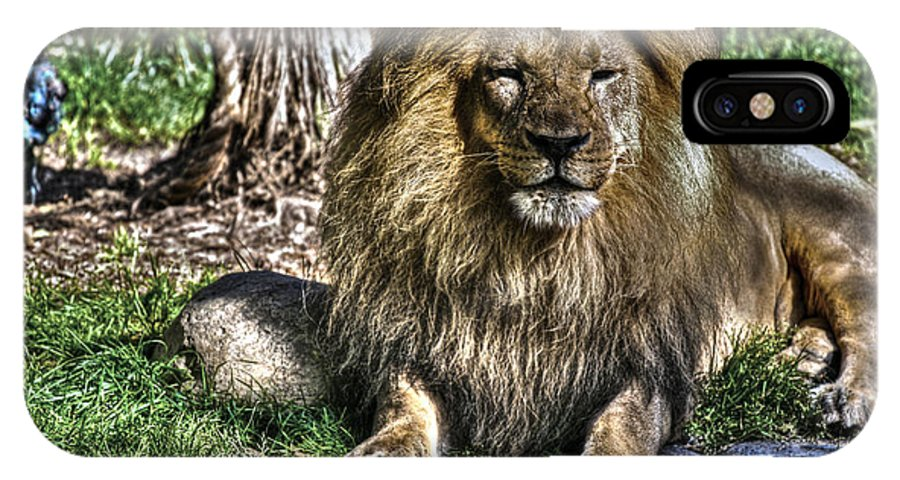 Animals IPhone X Case featuring the photograph Old King Lion by SC Heffner