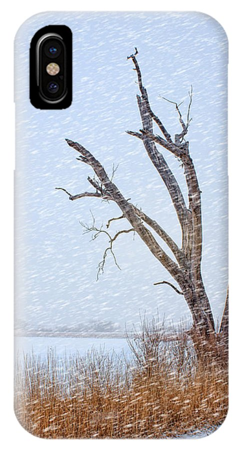 Tree IPhone X Case featuring the photograph Old Tree In Winter by Nikolyn McDonald