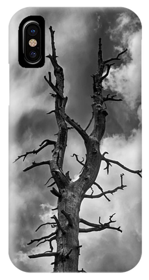 Black IPhone X Case featuring the photograph Old Trees Reach For The Sky by John Haldane