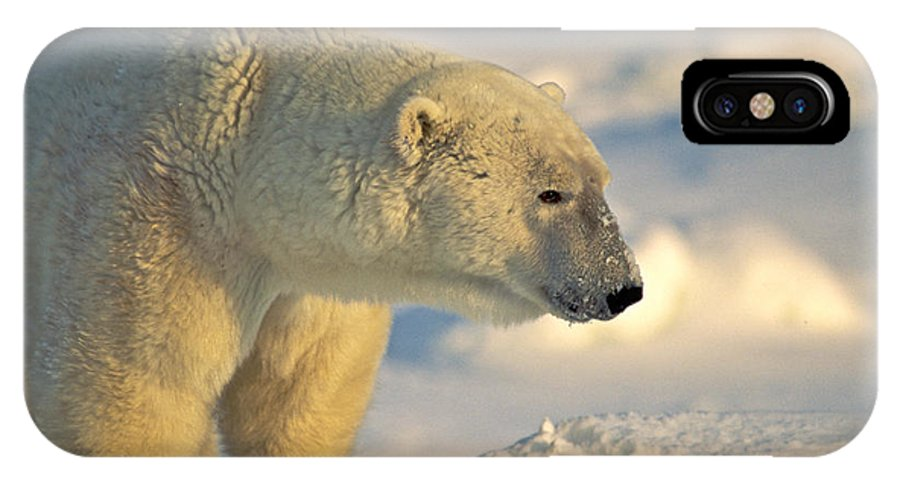 Arctic IPhone X / XS Case featuring the photograph Old Warrior by Randy Green
