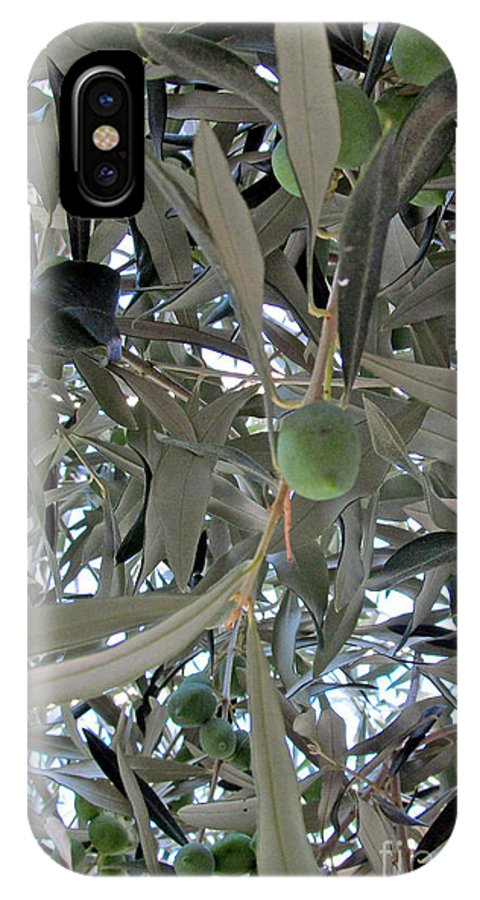 Olive IPhone X Case featuring the photograph Olives Of The Mediterrenean by Tina M Wenger