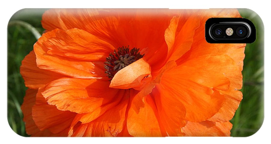 Poppy IPhone X Case featuring the photograph Olympia Orange Poppy by Christiane Schulze Art And Photography