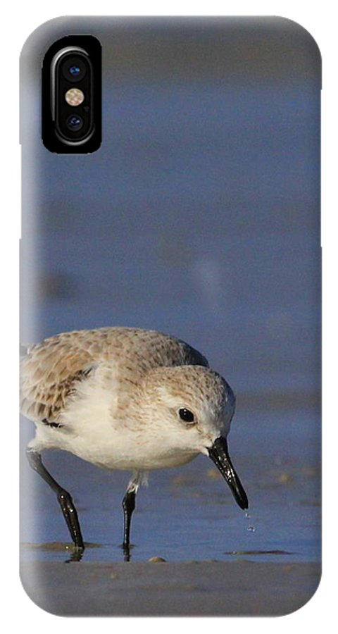 Sanderling IPhone X Case featuring the photograph On The Hunt by Cindy Reilley