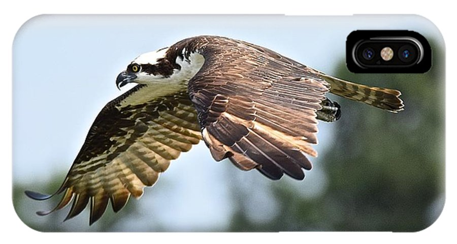 Osprey IPhone X / XS Case featuring the photograph On The Hunt by MCM Photography