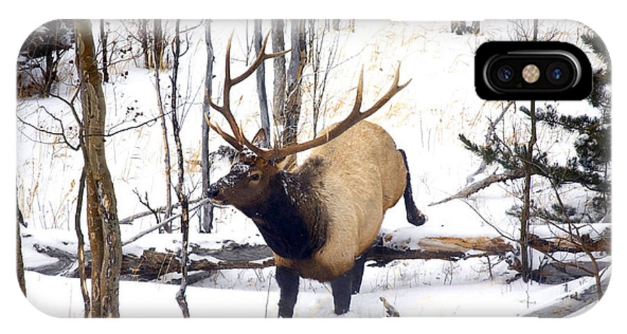 Elk IPhone X Case featuring the photograph On The Move by Mike Dawson