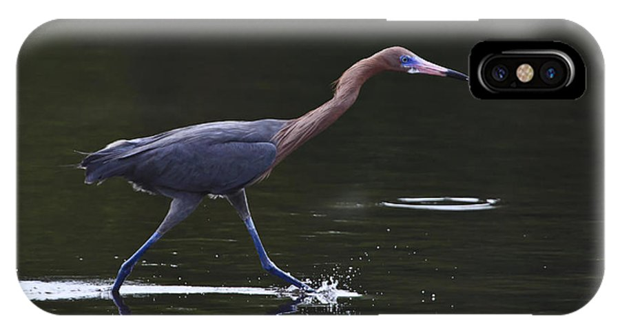 Reddish Egret IPhone X Case featuring the photograph On The Run by Gary Hall