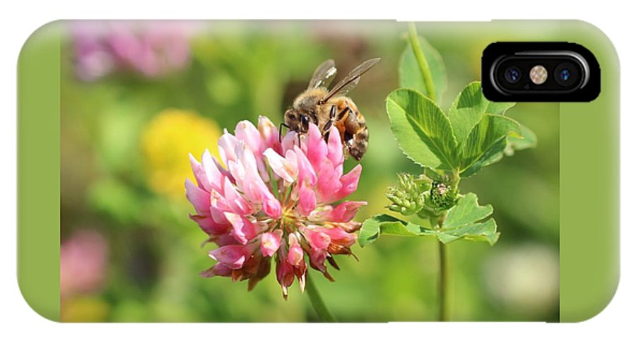 Honeybee IPhone X Case featuring the photograph On Top Of The Blossom by Lucinda VanVleck