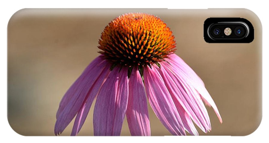 One Coneflower IPhone X Case featuring the photograph One Coneflower by Maria Urso