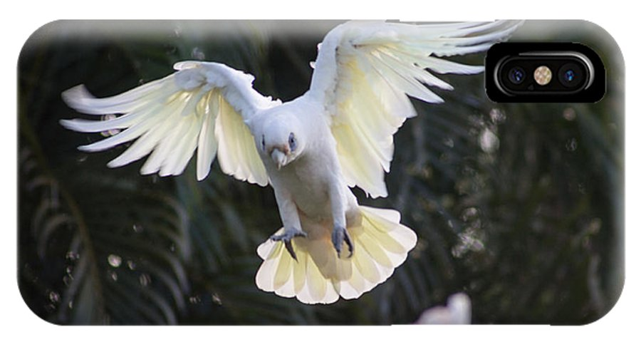 Birds IPhone X Case featuring the photograph One Small Step For Bird Kind by Michael Podesta