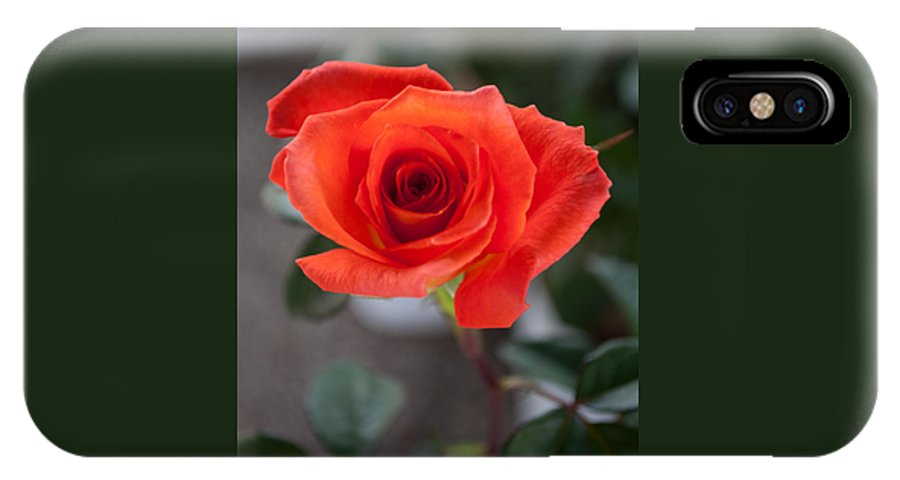 Background IPhone X Case featuring the photograph Opened Rose Bud by Jill Mitchell