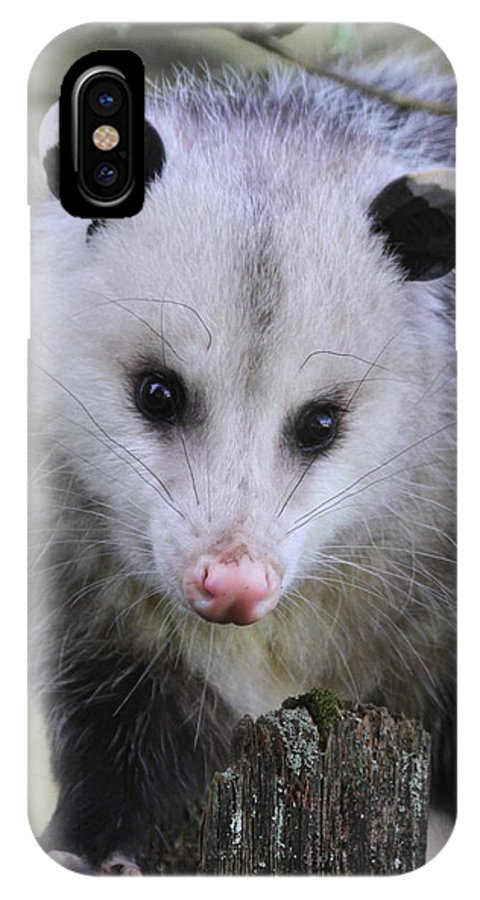 Marsupial IPhone X Case featuring the photograph Opossum by Angie Vogel
