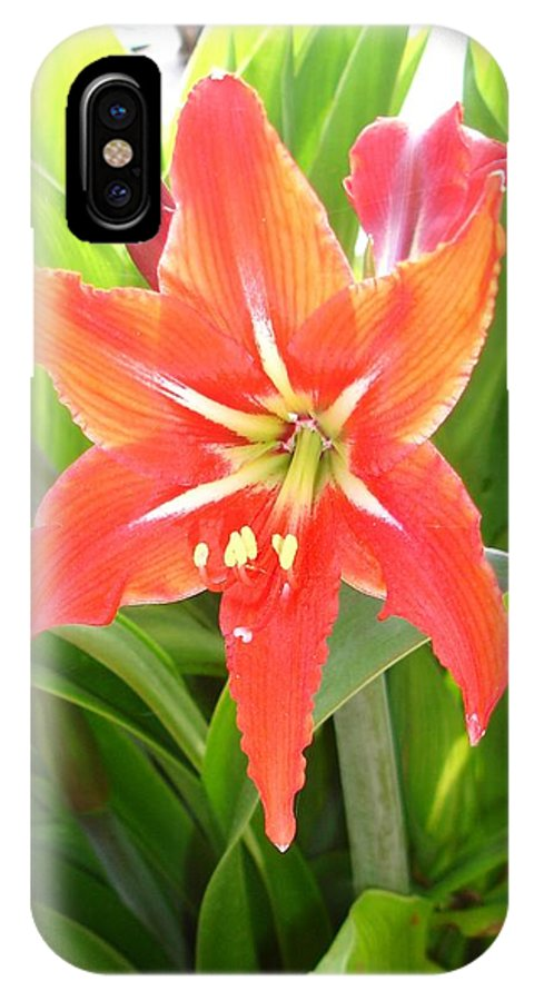 Flower IPhone X Case featuring the photograph Orange Amaryllis Flower Blooms In Springtime by Taiche Acrylic Art