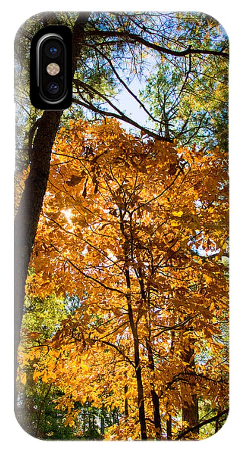 Autumn Photographs IPhone X Case featuring the photograph Orange Autumn II by Vernis Maxwell