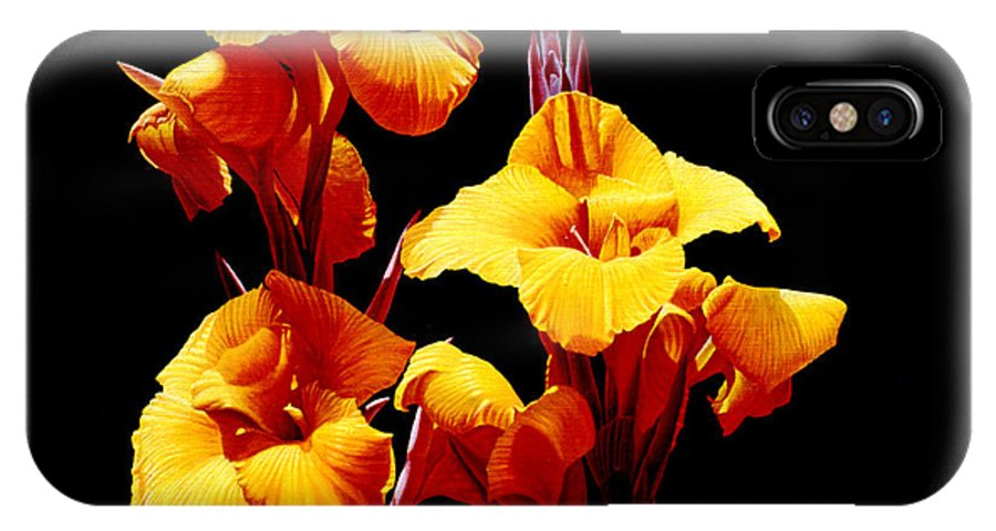 Yellow Cannas IPhone Case featuring the painting Orange Cannas by Gary Hernandez