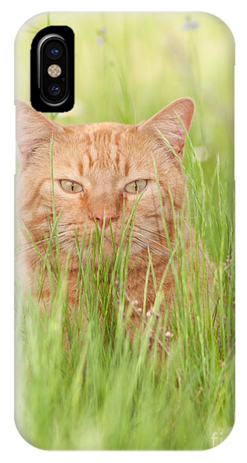 Orange IPhone X Case featuring the photograph Orange Cat In Green Grass by Sari ONeal