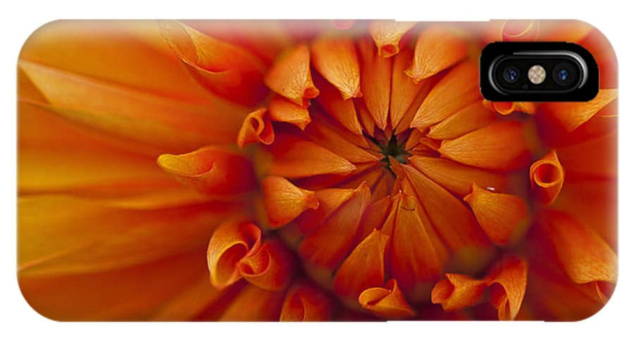 Dahlia IPhone X Case featuring the photograph Orange Dahlia Close Up by Michael Waller