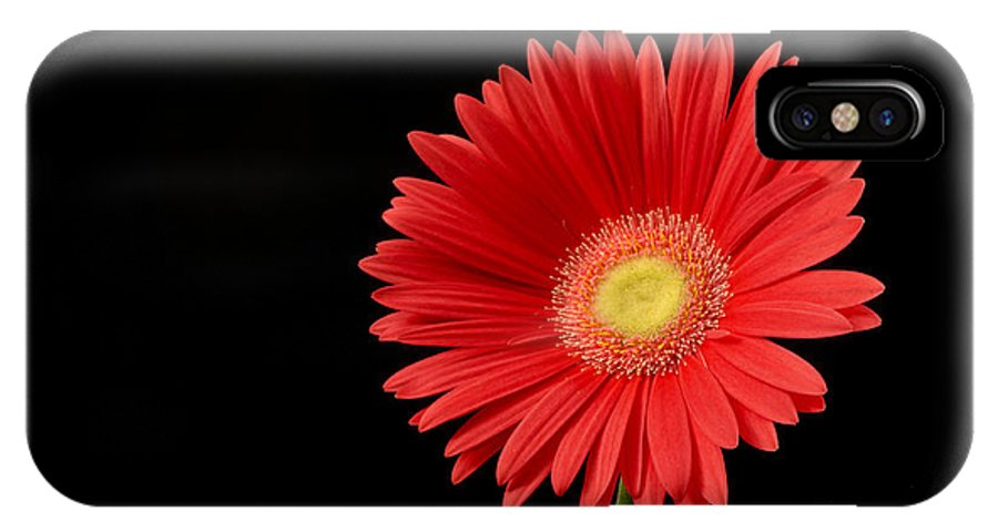 Background IPhone X Case featuring the photograph Orange Gerber Daisy by Gord Horne