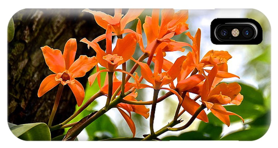 Orchid IPhone X Case featuring the photograph Orange Orchid by Carol Bradley