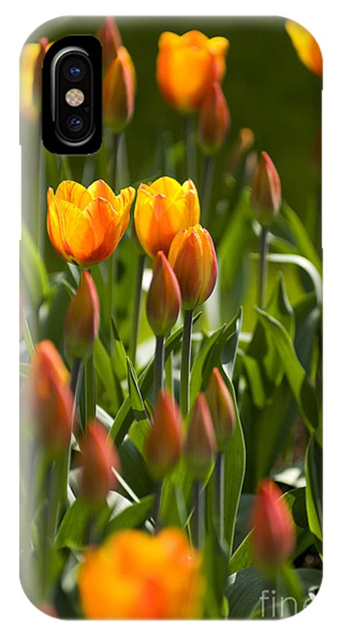 Flowers IPhone X Case featuring the photograph Orange Tulips by David Lichtneker