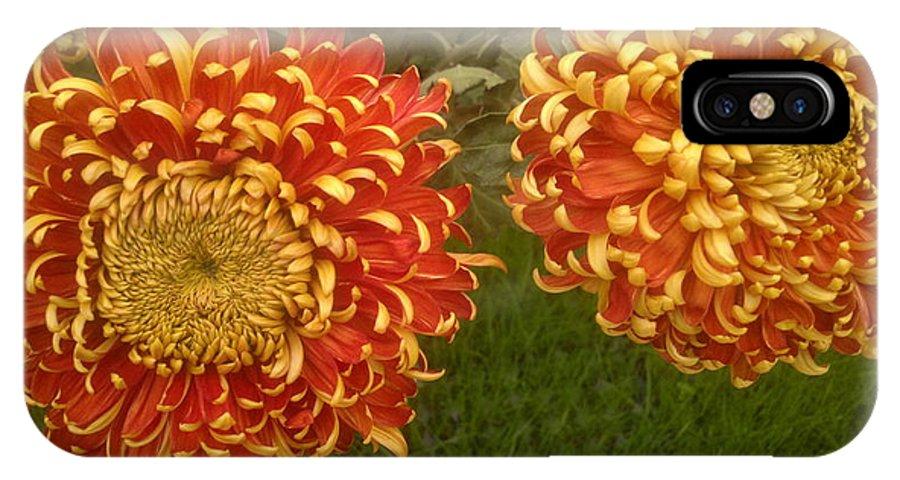 Chrysanthemum IPhone X Case featuring the photograph Orange-yellow Chrysanthemums by Stefan Silvestru
