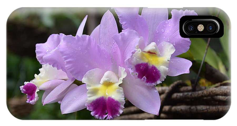 Orchids IPhone X Case featuring the photograph Orchids In A Basket by William Hallett