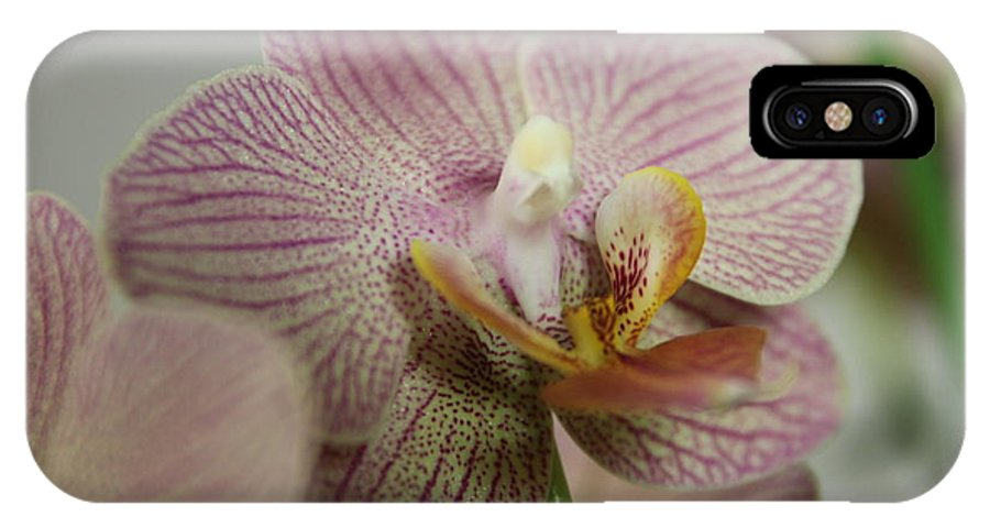 Flower IPhone X Case featuring the photograph Orchids5 by George Christoff