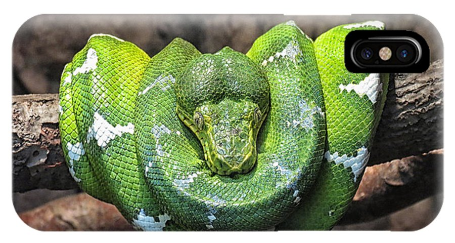 Summer IPhone X Case featuring the photograph Orderly Snake by Susan Desmore