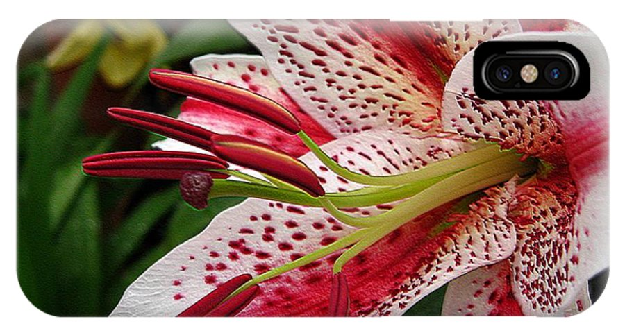 Oriental Lily IPhone X / XS Case featuring the photograph Oriental Hybrid Lily Named Dizzy by J McCombie