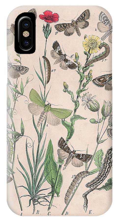Butterfly IPhone X Case featuring the drawing Orthosidae - Hadenidae by W