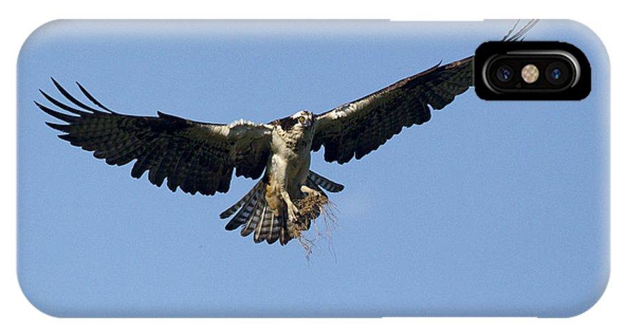 Doug Lloyd IPhone X Case featuring the photograph Osprey by Doug Lloyd