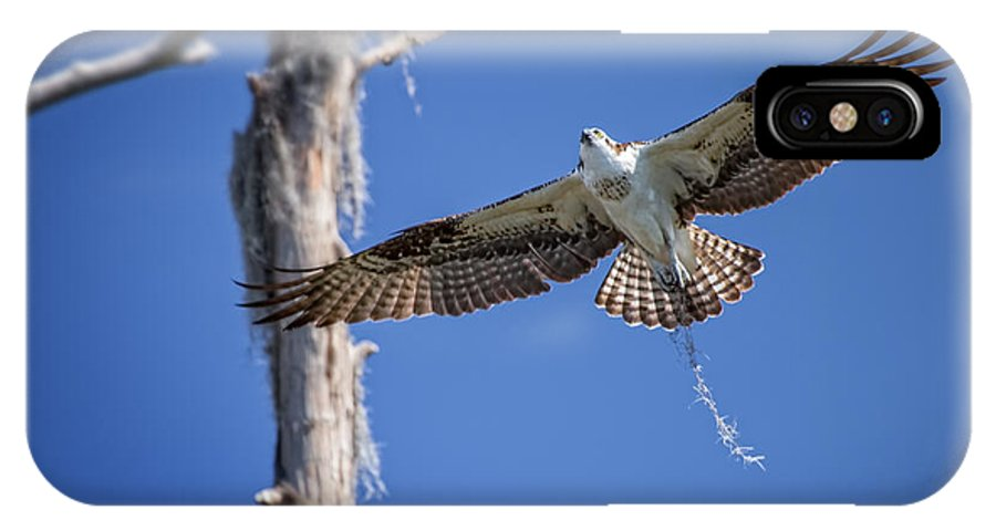 Animals IPhone X Case featuring the photograph Osprey Fly By by Carl Clay