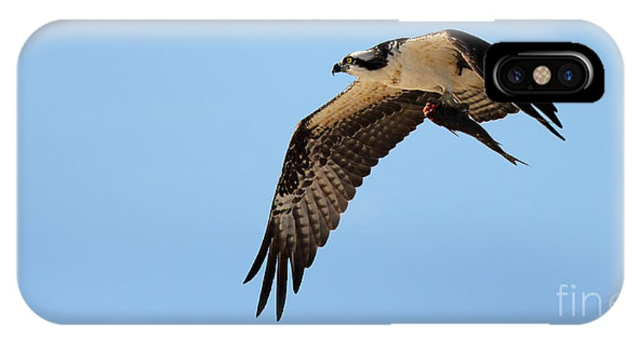 Bird IPhone X Case featuring the photograph Osprey Flying With Fish by Max Allen