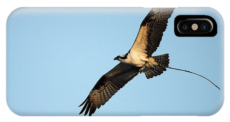 Bird IPhone X Case featuring the photograph Osprey Flying With Nesting Material by Max Allen