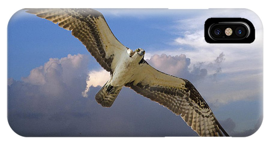 Osprey IPhone X Case featuring the photograph Osprey In Flight by TJ Baccari